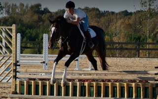 PHF-slide-equestrian10