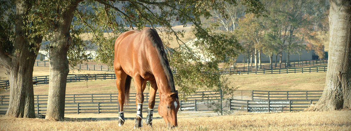 PHF-slide-equestrian12