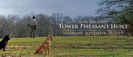 Tower Pheasant Hunts