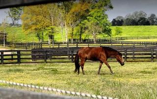 Providence Hill Farm - Central Mississippi