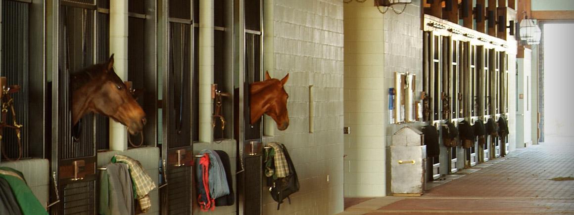 PHF-slide-equestrian3