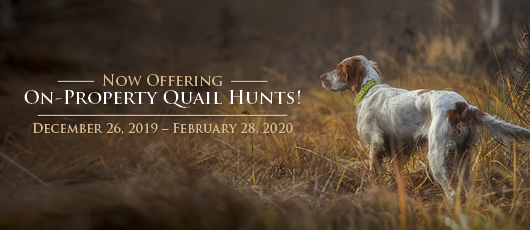 On Property Quail Hunts